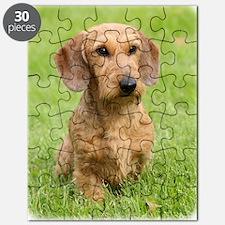 Dachshund 9Y426D-207 Puzzle