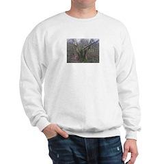 Old Tree Sweatshirt
