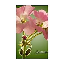 PinkGernaiums_5X7 Decal