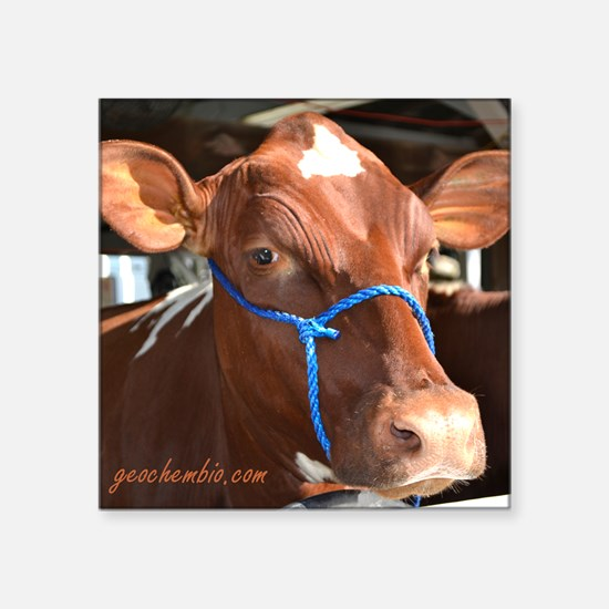 "Beautiful cow Square Sticker 3"" x 3"""