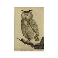 Big eared Owl Rectangle Magnet