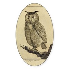 Big eared Owl Decal
