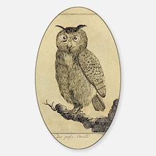 Big eared Owl Decal