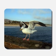Sea Gull with its wings out Mousepad