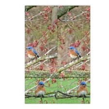 BB5.263x12.885(203) Postcards (Package of 8)