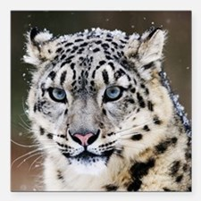 "Snow Leopard Square Car Magnet 3"" x 3"""