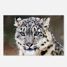 Snow Leopard Postcards (Package of 8)