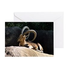 Nubian Ibex showing off his good sid Greeting Card