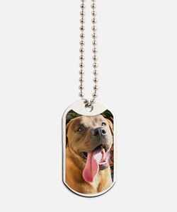 Card-Aiden Dog Tags