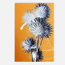 Burdocks Painting Postcards (Package of 8)
