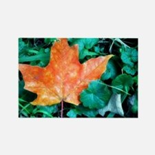 Autumn Leaf Painting Rectangle Magnet