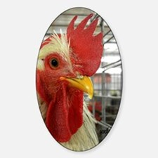 Curious rooster Sticker (Oval)