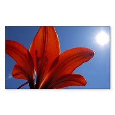 Sunlit Tiger Lily Decal