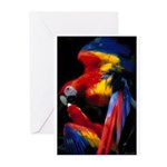 Scarlet Macaw Greeting Cards (Pk of 10)