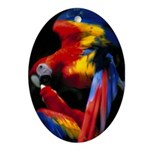 Scarlet Macaw Oval Ornament