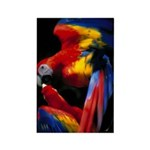 Scarlet Macaw Rectangle Magnet (100 pack)