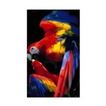 Scarlet Macaw Rectangle Sticker