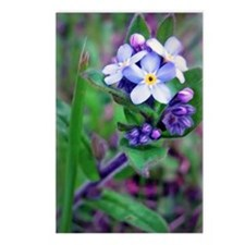 Forget Me Not Postcards (Package of 8)