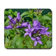 Bellflowers Mousepad