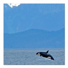 """baby orca Square Car Magnet 3"""" x 3"""""""