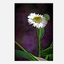 One Daisy Postcards (Package of 8)