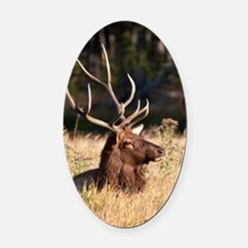 Elk (8) Oval Car Magnet