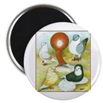 Pigeon Color Book Magnet