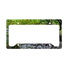 turtlewater License Plate Holder