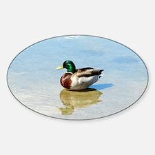 Drake Sticker (Oval)