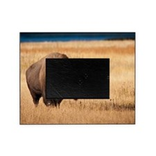 Bison (9) Picture Frame