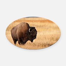 Bison (9) Oval Car Magnet
