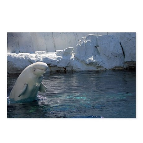 Beluga Whale jumping 2 Postcards (Package of 8)