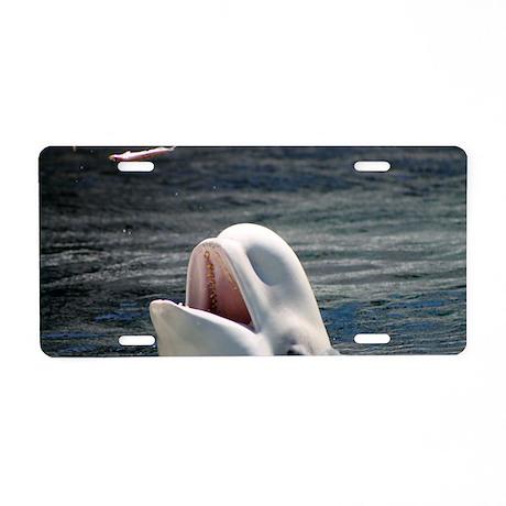 Beluga Whales 5 Aluminum License Plate