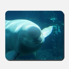 Close up of a Beluga Whale 3 Mousepad