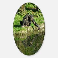 Chimp-1 Sticker (Oval)