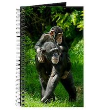 Chimp-2 Journal