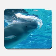 Close up of a Beluga Whale 2 Mousepad