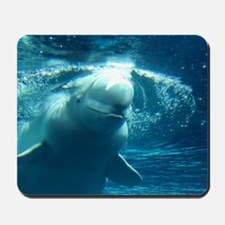 Close up of a Beluga Whale 5 Mousepad