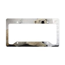 Polar Bear looking sleepy 2 License Plate Holder