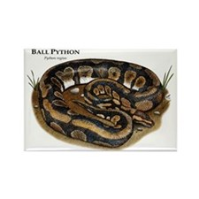 Ball Python Rectangle Magnet