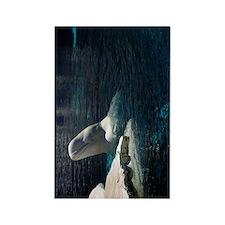 Beluga Whales 4 Rectangle Magnet
