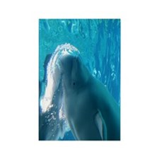 Close up of a Beluga Whale 2 Rectangle Magnet