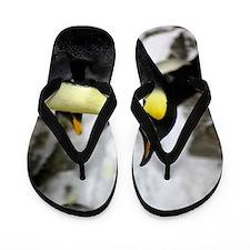 Emperor Penguin 2 Flip Flops