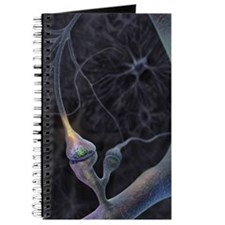 Graham HHMI Synapse Journal