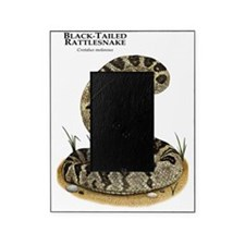 Black-Tailed Rattlesnake Picture Frame