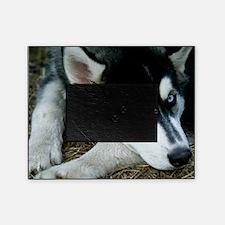 Siberian Husky Dog Picture Frame
