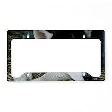 Siberian Husky Dog License Plate Holder