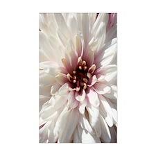 White and Pink Chrysanthemum Decal
