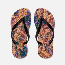 Colour Splendour Flip Flops