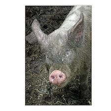 6653 Pig 2 Postcards (Package of 8)